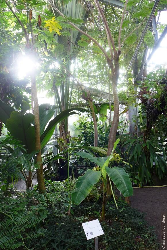 Сад признан памятником архитектуры, охраняемым государством. Вход бесплатный.