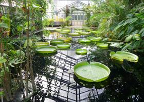 Боннский сад