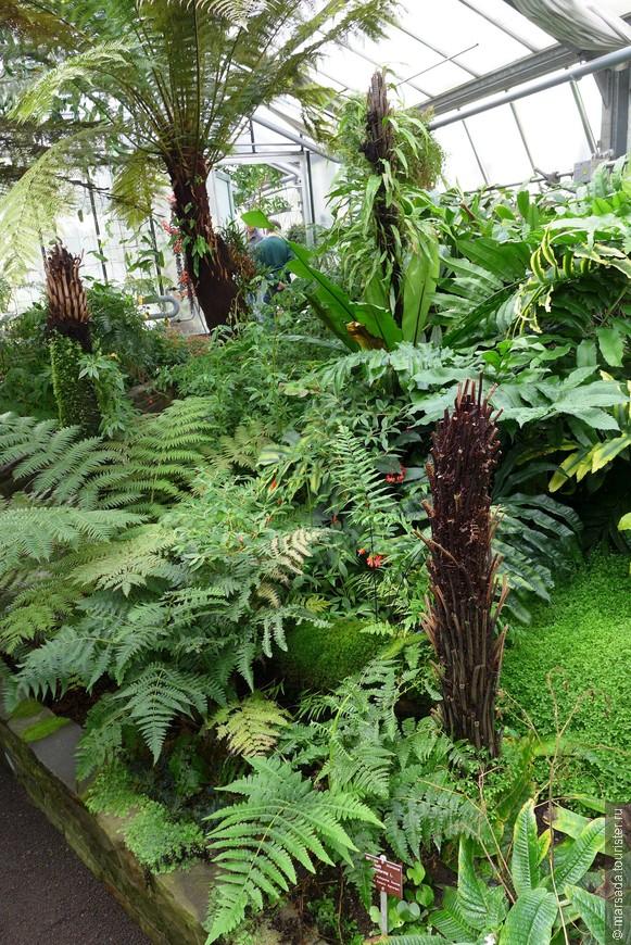"""Раз в несколько лет на вход выстраивается очередь, чтобы посмотреть на одно из чудес природы - самый большой в мире цветок, индонезийский Аморфофаллус Титанум или """"трупный цветок"""", как его называют местные жители, опыляемый в естественных условиях насекомыми, ищущими падаль."""