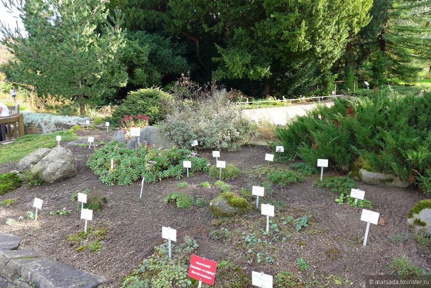 Вообще-то этот сад состоит из нескольких подразделений: собственно ботсада вокруг дворца, доступной коллекции полезных растений и закрытого для посетителей  отдельного участка в районе Венусберг.