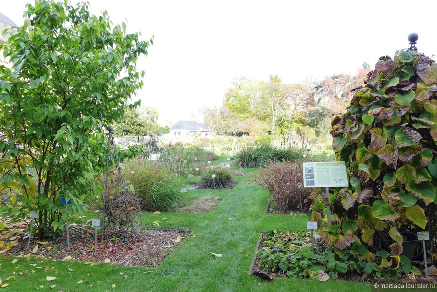 Естественно, как и в любом парке, есть дендрарий, которым сотрудники очень гордятся. В саду дивная коллекция араукарий, часть из которых вывозят на улицу только летом.
