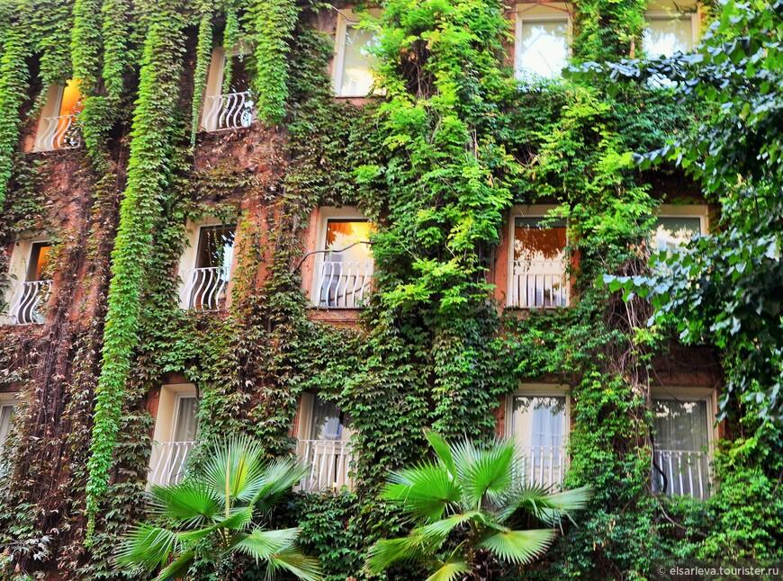 Дом рядом с  церковью Санта Мария - делла - Анима,  обилие зелени очень даже впечатляет