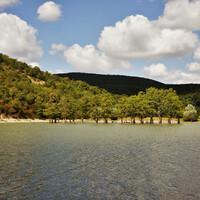 Искусственное озеро - водохранилище создавалось в 30-е годы. Болотные кипарисы были посажены тогда же, в качестве эксперимента. Прижились.