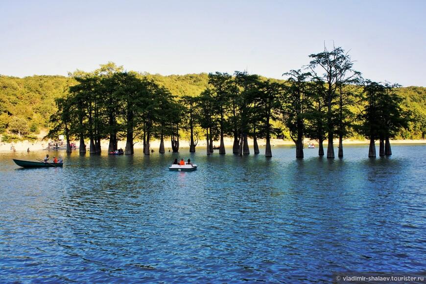 Средняя высота деревьев до 30 метров, средний диаметр около 50 сантиметров.