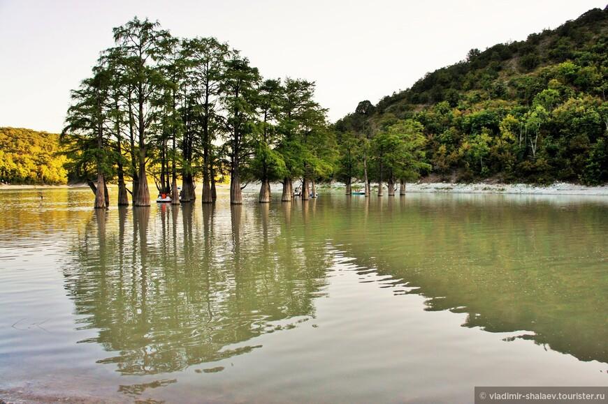 С весны до ранней осени корни деревьев находятся в воде. Осенью листва болотных кипарисов приобретает ржавый оттенок. Деревья переносят длительное затопление благодаря наличию особых дыхательных корней. Плотная древесина деревьев устойчива к гниению.