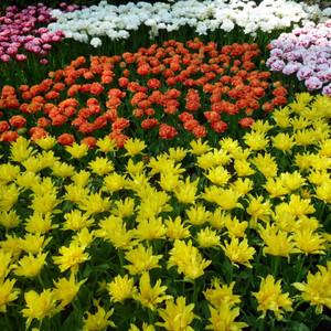 Кёкенхоф, праздник цветов