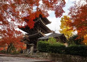 Японцы не ограничиваются строительством парадного здания, они рисуют картину. Картину из храма, деревьев, воды, цветов. Видите голые ветви за кленами, это сакуры, они сейчас отдыхают, а весной они будут «группой поддержки»