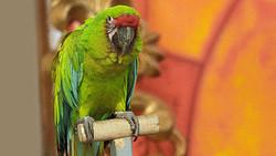 В «Пулково» сняли с рейса попугая