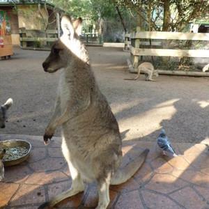 Австралия, Национальный парк Голубые Горы
