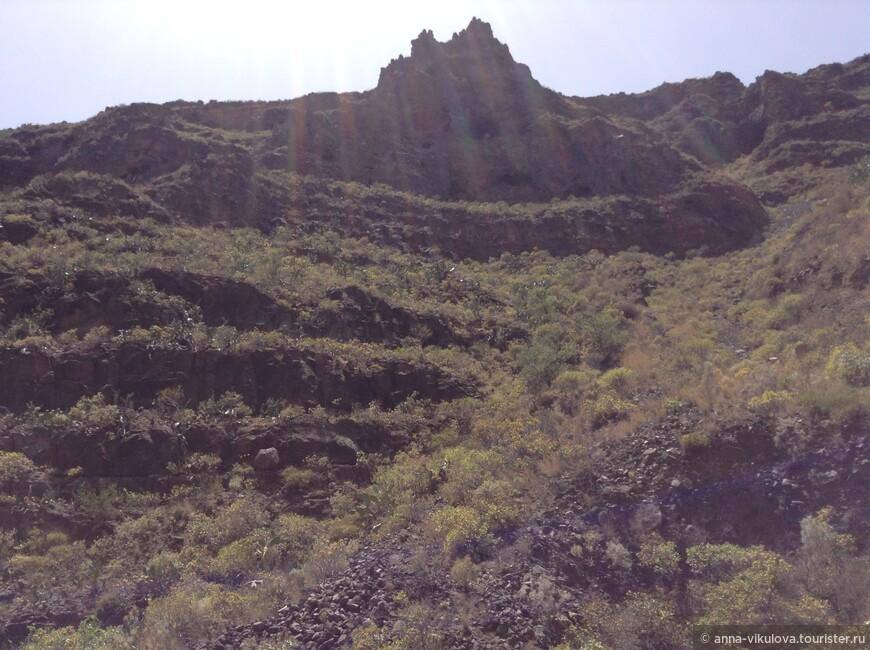 А теперь наш путь лежит в горный массив Агвимеса, в пещерный городок в барранко Гуайядехе