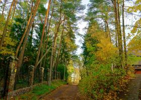 Я не выбирал фотографий специально с деревьями. Наоборот, если бы меня попросили дома без окружения растительностью, я бы был в глубоко озабочен. Нет в этом городе домов, которые не  стоят в лесу.