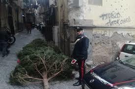 В Неаполе украли новогоднюю ель
