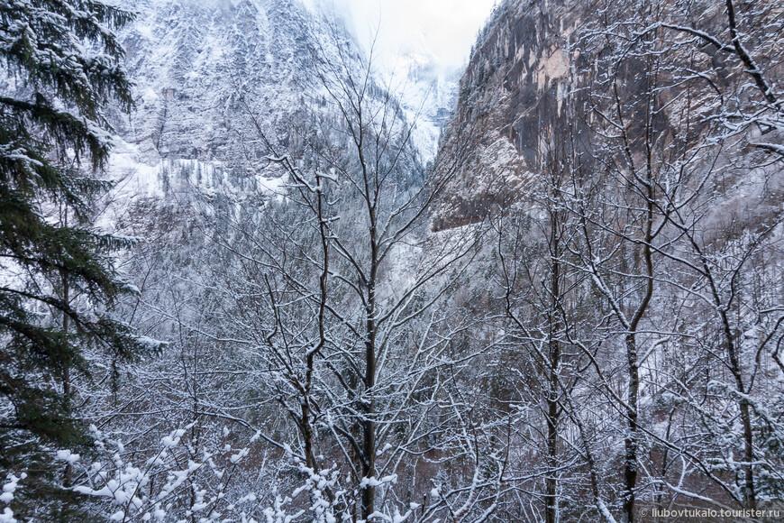 Графика зимнего леса