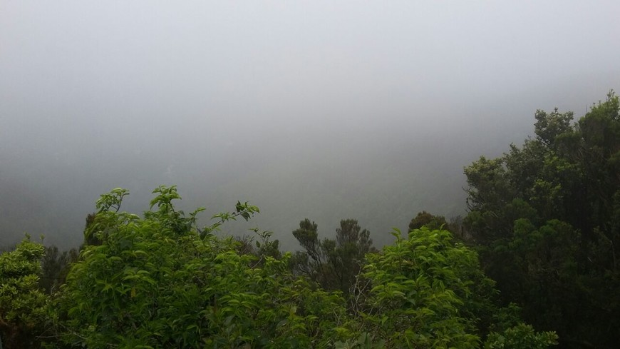 Тенерифе - это непроглядный туман.