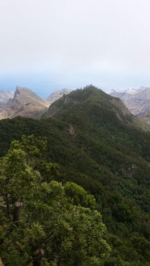 На Тенерифе очень приятный климат. Удивительно, но остров всегда находится в весеннем сезоне. Это происходит из-за смешения африканской жары с Канарским течением и пассатами. Круглый год там самая комфортная температура – 23С°. А вода прогревается до 19С°.