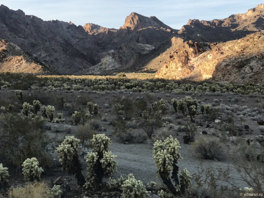 Каньон Эльдорадо (El Dorado Canyon, Nevada) и кактусы плюшевые мишки