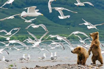 В Москве пройдёт масштабный фестиваль фотографий дикой природы России