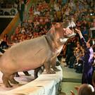 Волгоградский цирк «Арлекино»