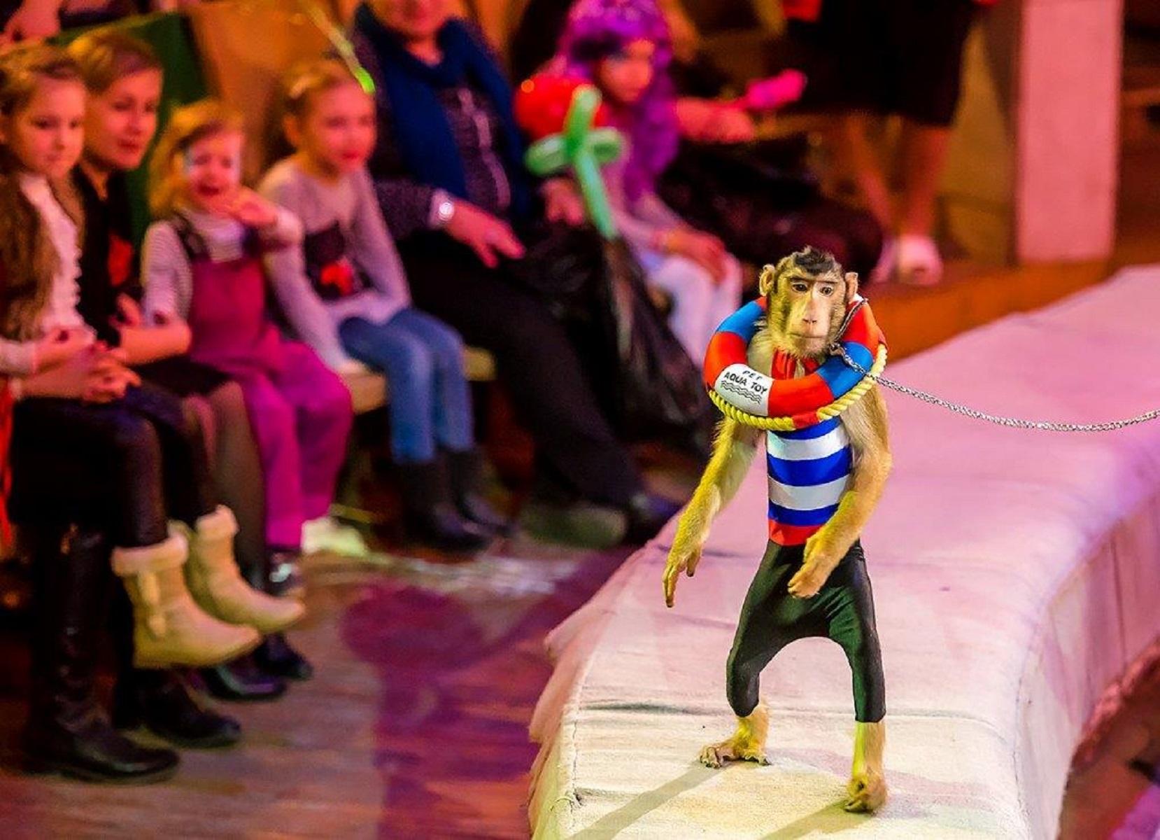 Кисловодский цирк как купит билеты шоу под дождем челябинск билеты