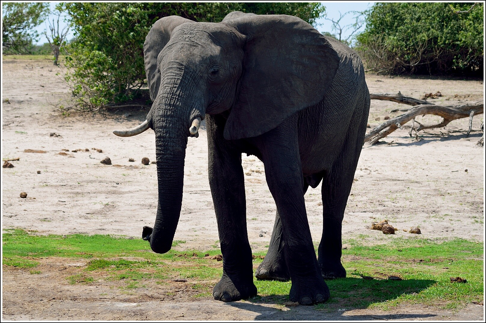 этот картинки жирафа слона зебры клаус популярный