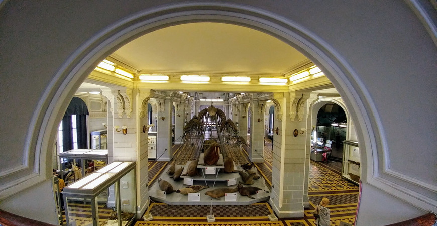 Зоологический музей РАН