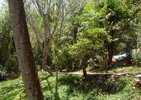 Near_Bang_Pae_waterfall_2010_-_panoramio_(1).jpg