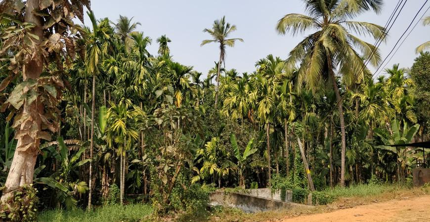 Плантация специй в Гоа Сахакари (Sahakari Spice Farm)