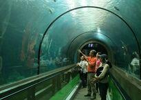 Океанариум Пхукета (Phuket Aquarium)
