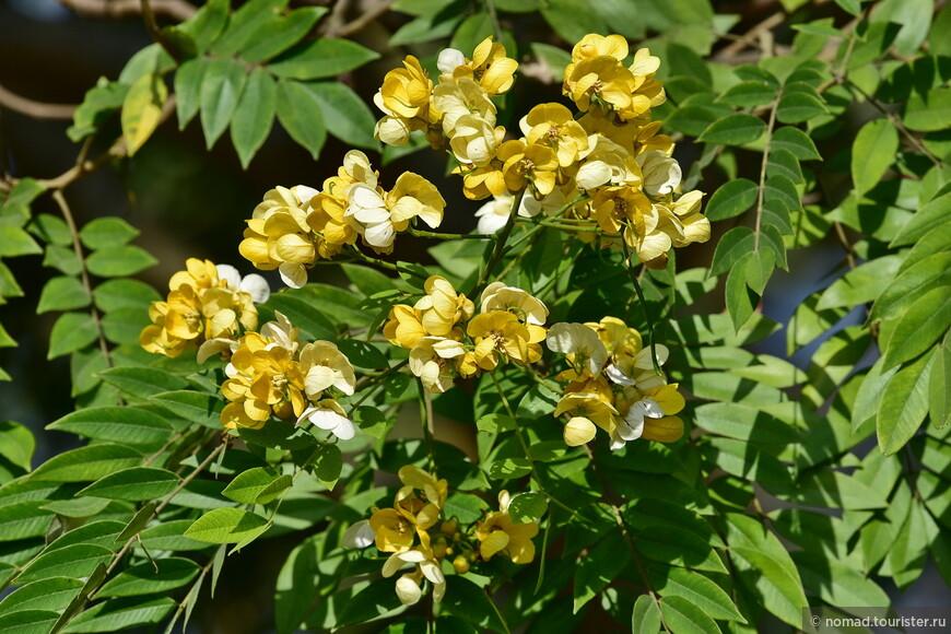 Чианг Май цветет и пахнет...