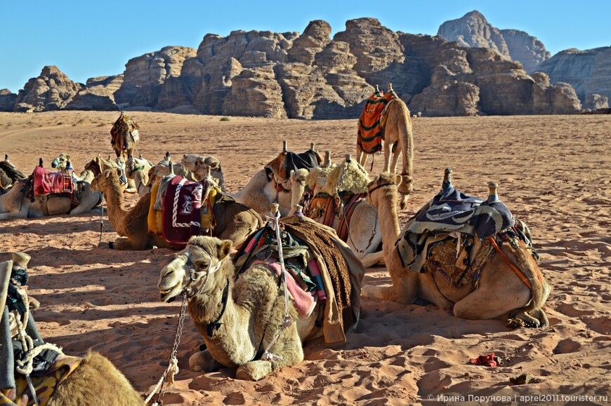 Не возможно представить пустыню без ее главного символа  - верблюда. Караваны верблюдов как и прежде следуют по пустыне, но сейчас они перевозят на специи и другие товары, а туристов.