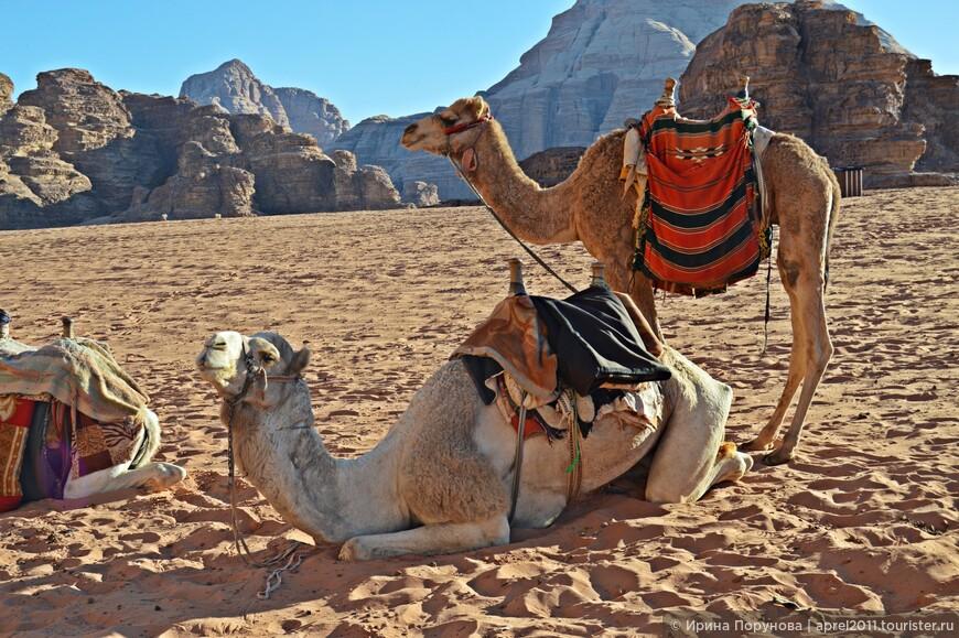 10 динар стоит стоит 15-20 минутное катание на верблюде.