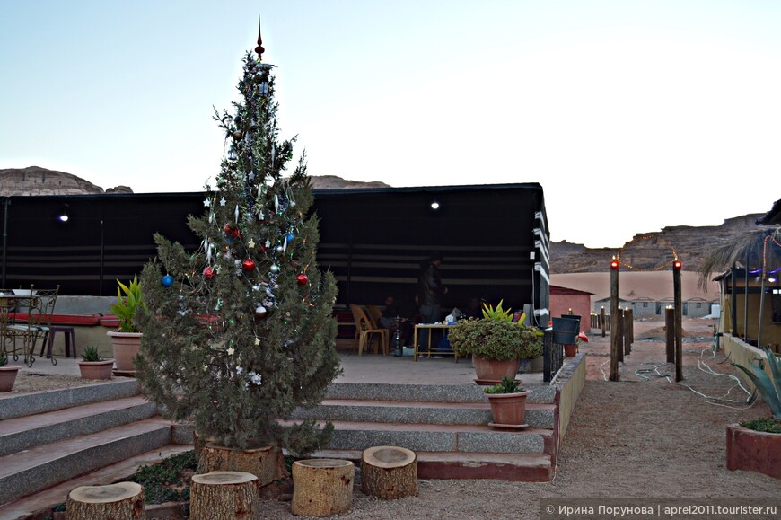Неожиданно было увидеть рождественскую ёлку в лагере бедуинов посреди пустыни...