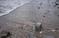 Пляж «Морская звезда» в Лазаревском