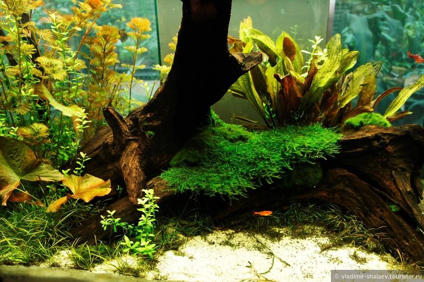 В оранжерее представлено небольшое количество аквариумов с маленькими рыбками.