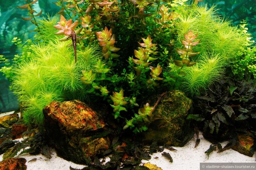 Тут важнее подводные растения, а не рыбки.