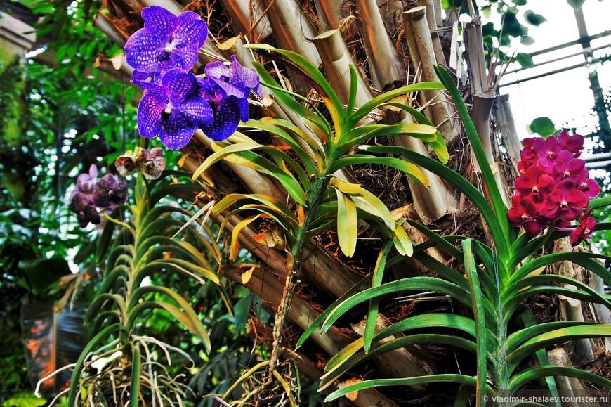 В Пальмовой оранжерее первым делом все идут к орхидеям.