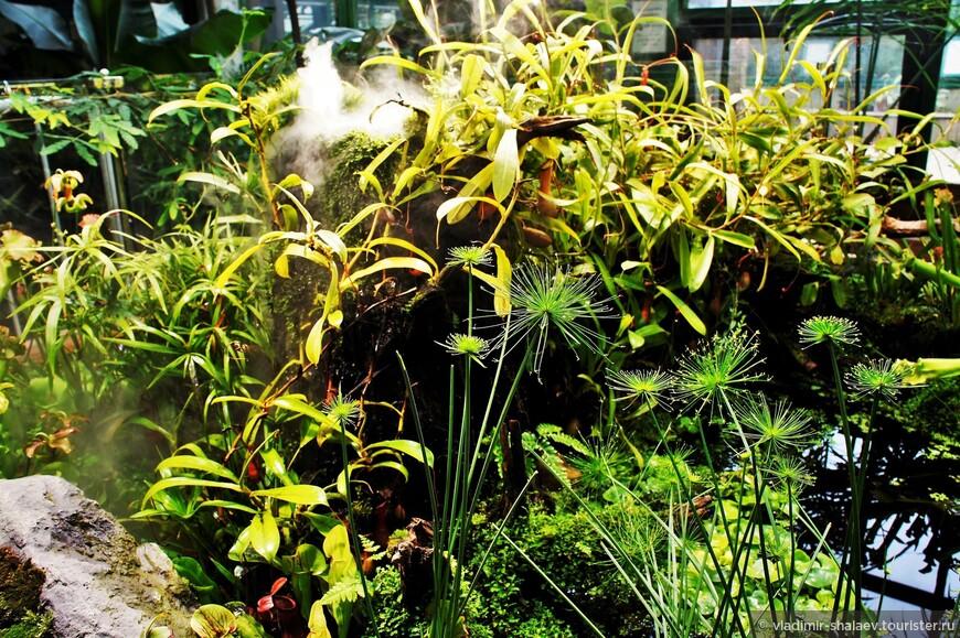 """В некоторых местах воссозданы """"микро-миры"""", где в миниатюре показаны участки растительности с """"водопадами"""", """"горками"""" и т.п. В данном случае - это альпийская горка с хищными и не совсем полезными растениями."""