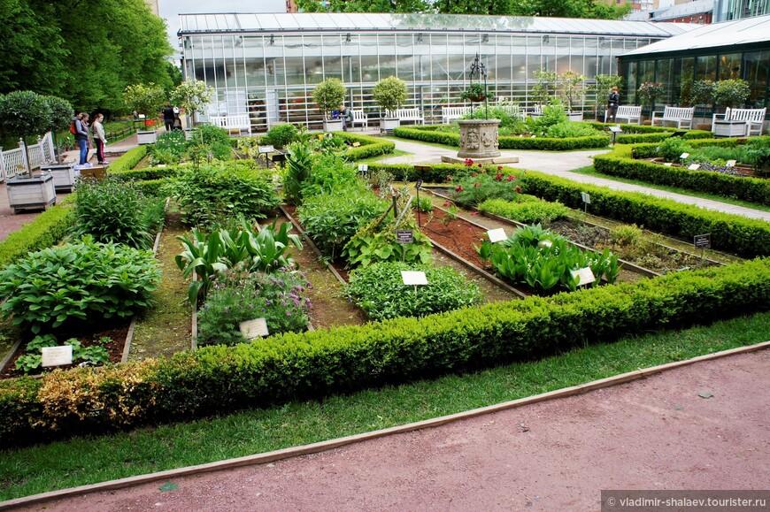 Сад лекарственных трав.