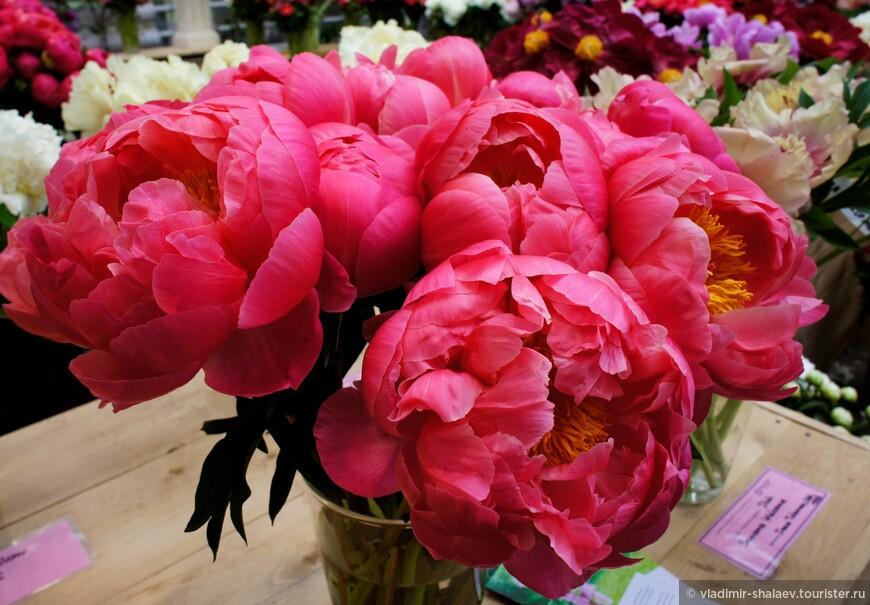Выставочная оранжерея Ботанического сада МГУ «Аптекарский огород». Здесь периодически проводятся выставки букетов. Мы попали на выставку пионов.