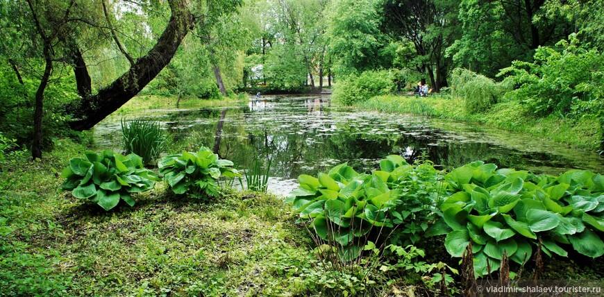 Копаный пруд в Аптекарском огороде. Был создан в начале 18 века для полива посадок.