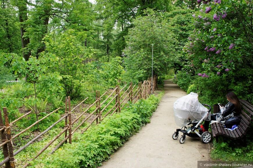 Аптекарский огород - прекрасное место отдыха для мам с колясками.