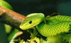 Сибирскую туристку на отдыхе в ЮАР укусила ядовитая змея