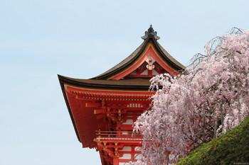Составлен прогноз цветения сакуры в Японии