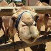 Camel Park Cyprus. Детские радости.