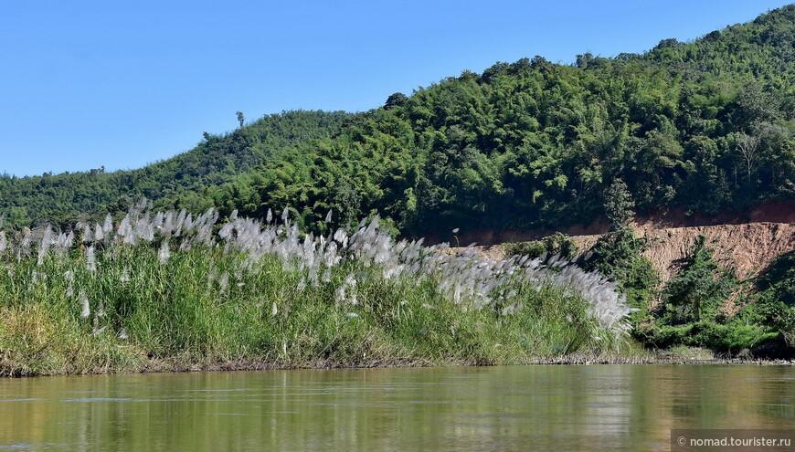 Итак, как вы все наверное помните, в Чианг Рай мы плыли на лодке по реке Кок.