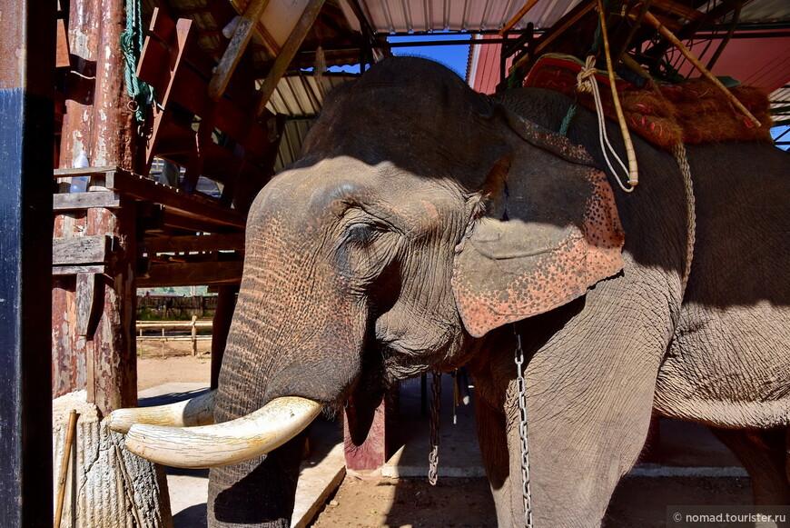 Посетив слонов....