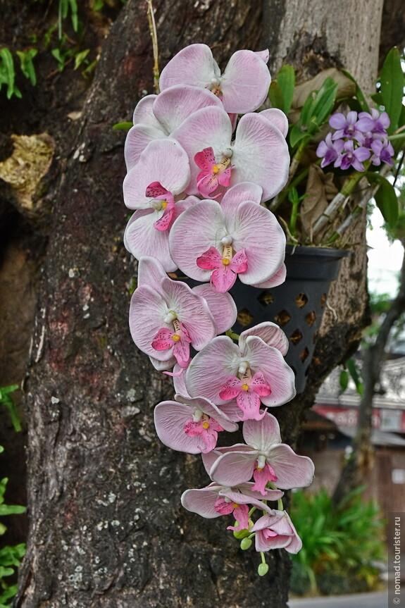 Орхидеи в городе.