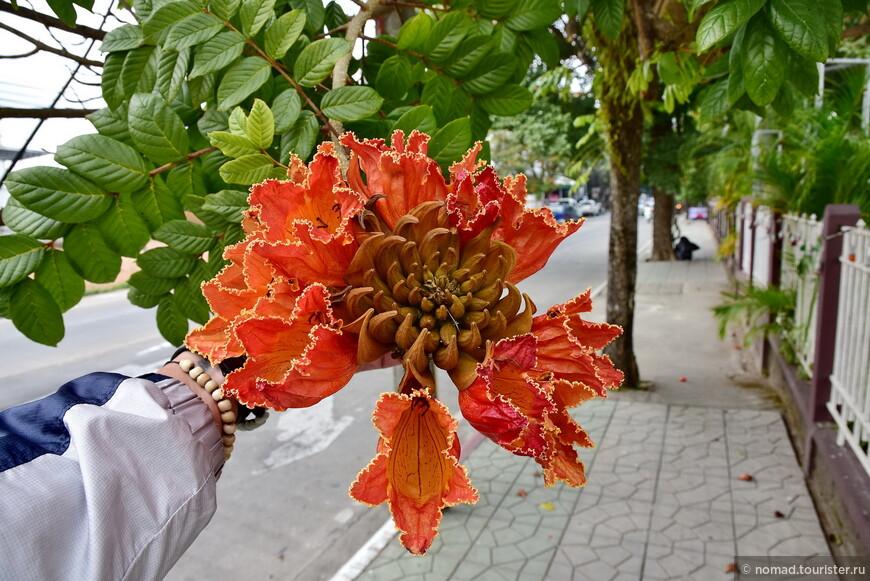 Цветок тюльпанового дерева. всегда мне хотелось посмотреть его поближе... )