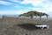 Пляж «Сосновая роща»