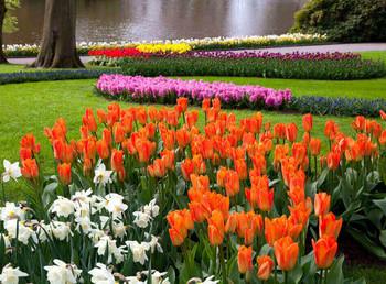 Голландский цветочный парк Кёкенхоф открывает сезон